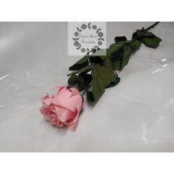 Rose tige rose pastel