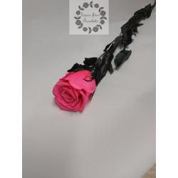 Rose éternelle rose vif tige