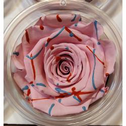 Bouton rose rayé