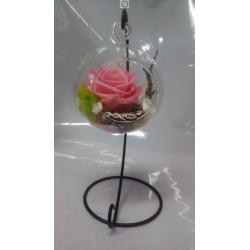 Rose éternelle rose pale...