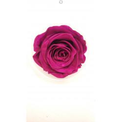 Bouton de rose éternelle prune
