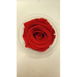 Bouton de rose éternelle rouge