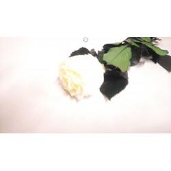 Rose éternelle tige blanche