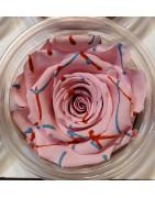 Bouton de rose éternelle